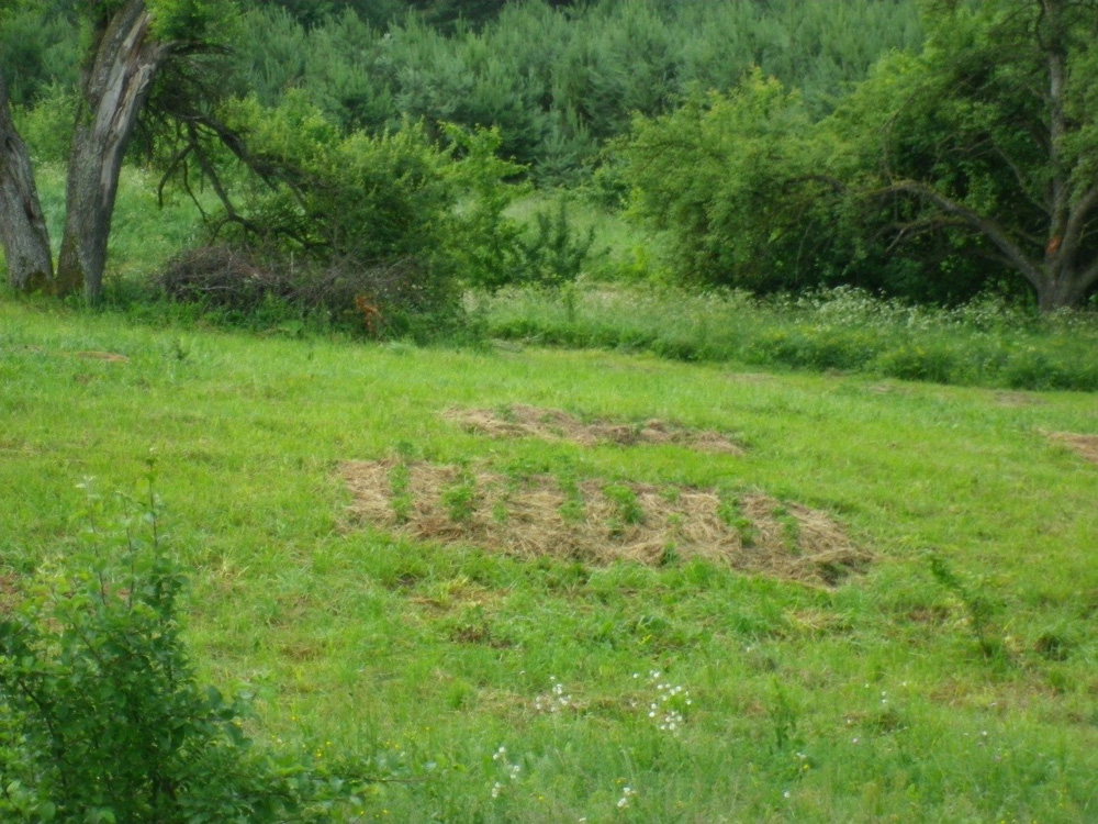 Daržovių salelės pievoje