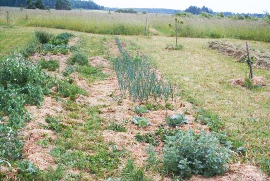 Kokią ekosistemą primena šį nuotrauką? Gal pievą? Tuomet tikrai ekologiškame darže štai toks vaizdas ir turėtų būti.