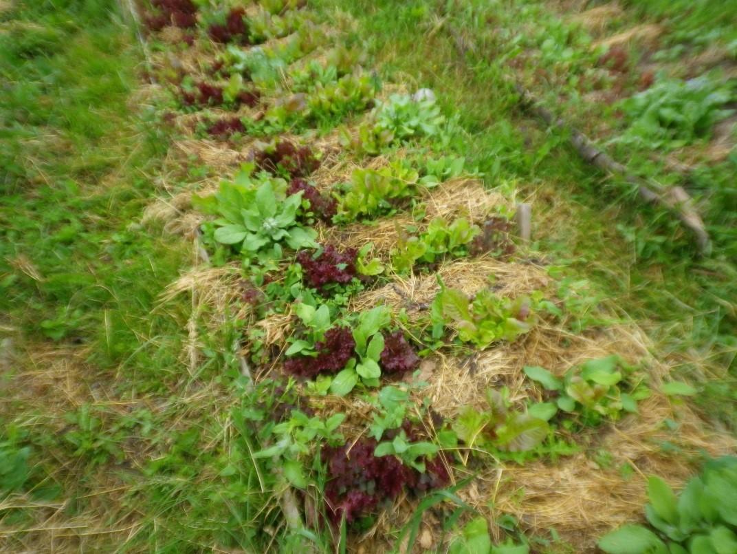 6. Agurkles, ivairios salotos
