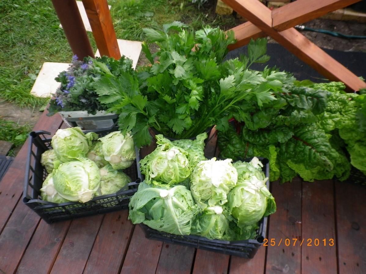 Kvepiančios daržovės iš daržo tiesiai bendruomenės nariams