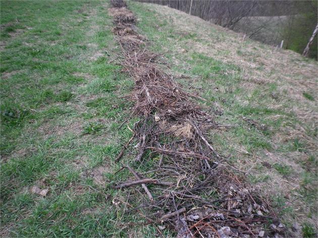 Šakelės, žievės, pasmulkinta mediena dedama į avietyną.